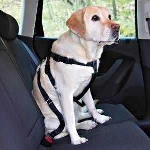 Trixie Köpek Emniyet Kemeri L70-90cm